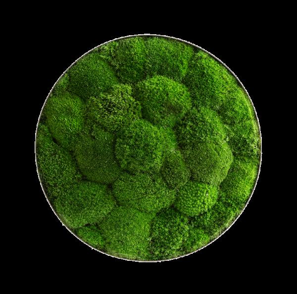 Moss picture: Pole moss-ellipsoid 34cm