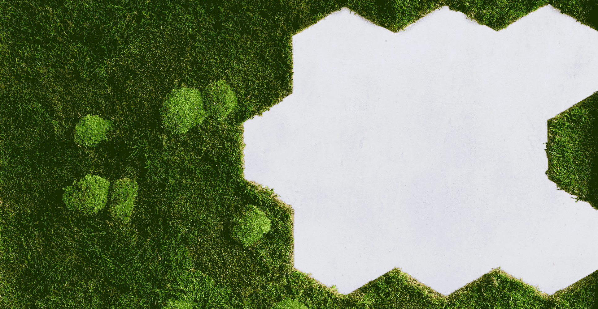 Mooswand-Pflanzenfand-flexGreen