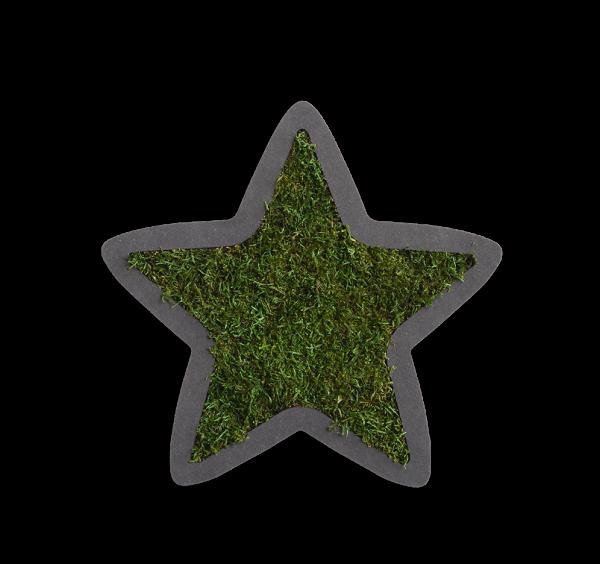 Pictogram: Starlet