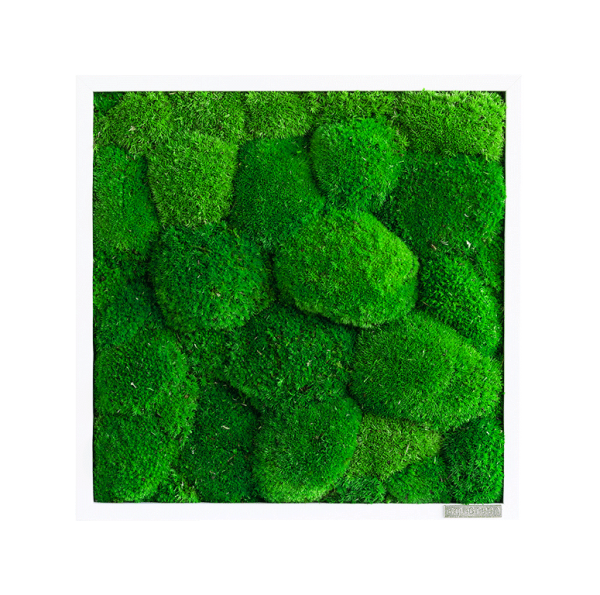 Moss picture: Pole moss picture 35x35