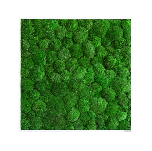 Moss picture: Pole moss picture 80x80