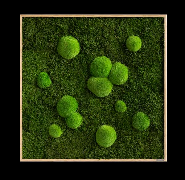 Moosbild: Wald- und Kugelmoosbild 80x80cm