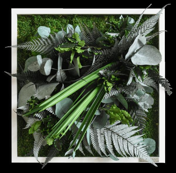 quadro di piante con disegno della giungl 35x35cm struttura in legno massello (bianco)