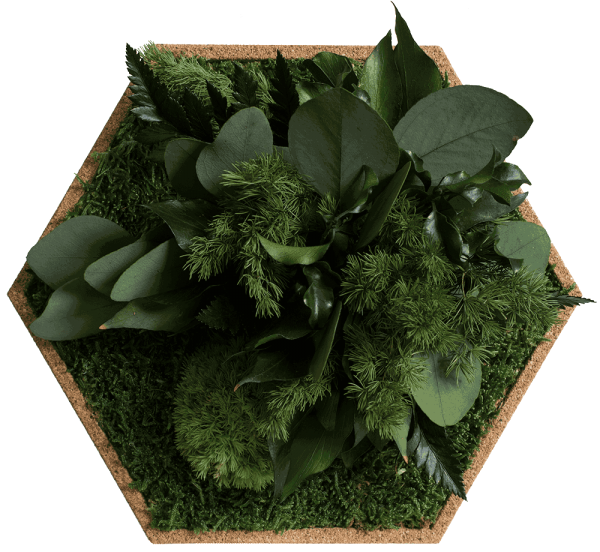 Cork hexagon with greening jungle, pack of 6