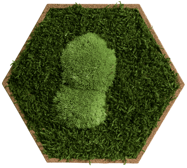 Cork hexagon with greening pole and forest moss, pack of 9