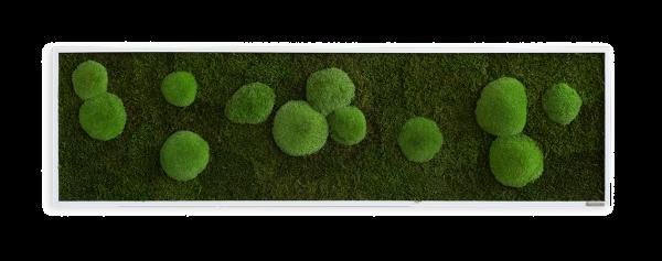 Moosbild: Wald- und Kugelmoosbild 140x40cm