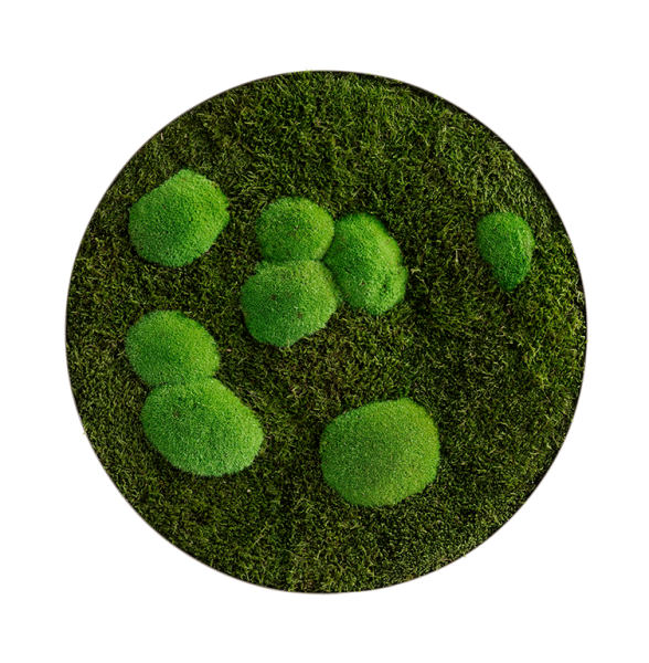 Moss picture: Forest and pole moss circle 54cm