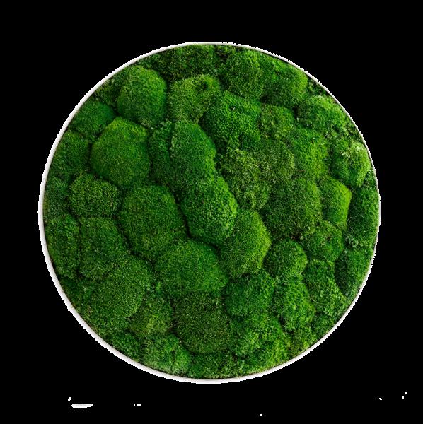 Moss picture: Pole moss-ellipsoid 54cm