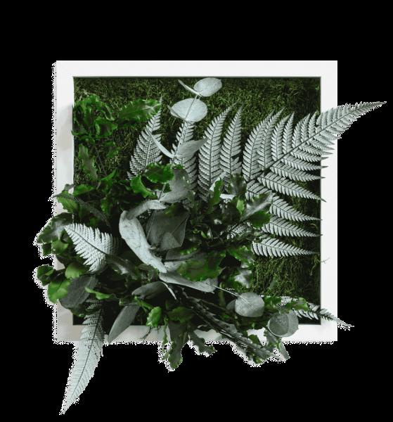 quadro di piante con disegno della giungl 22x22cm struttura in legno massello (bianco)