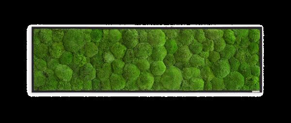 Moosbild: Kugelmoosbild 140x40cm