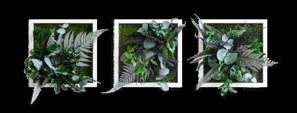 Pflanzenbild im Dschungeldesign 22x22cm 3er Set Vollholz (weiß)