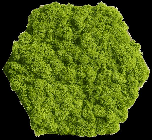 Cork hexagon with greening reindeer moss, pack of 9