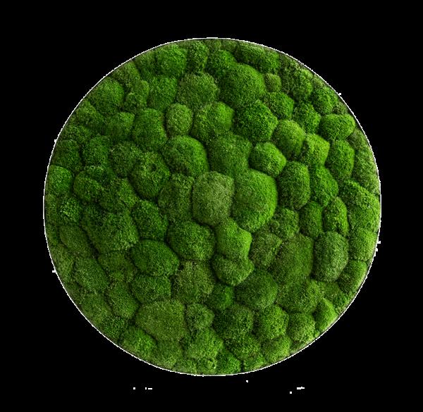 Moss picture: Pole moss-ellipsoid 80cm