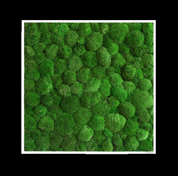 Quadro di muschio: quadro di muschio palla 80x80cm