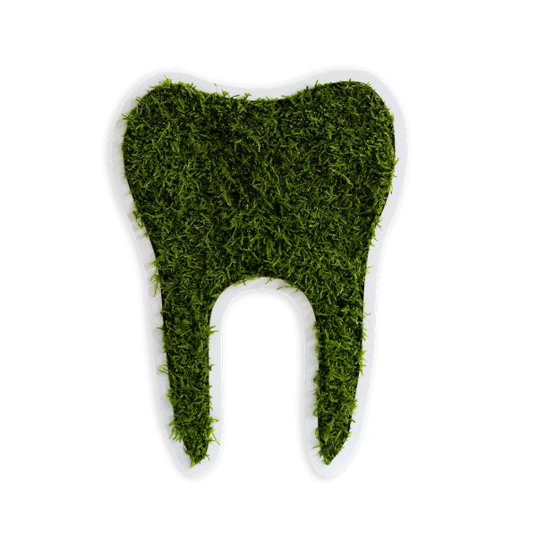 Piktogramm: Zahn klein Waldmoos (30cm)