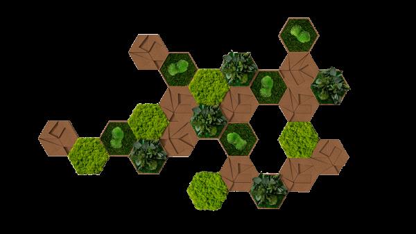 Kork-Hexagon 25er Set