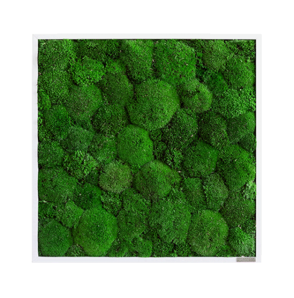Moss picture: Pole moss picture 55x55