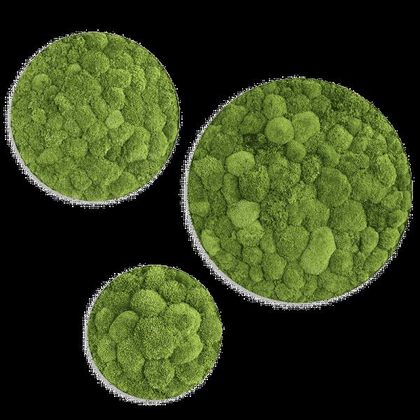 Pole moss circles set