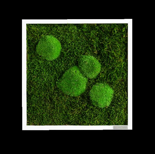 Moosbild: Wald- und Kugelmoosbild 35x35cm