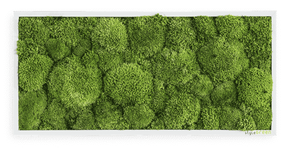 Moss picture: Pole moss picture 57x27