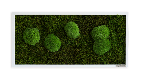 Moss picture: Pole and forest moss picture 57x27